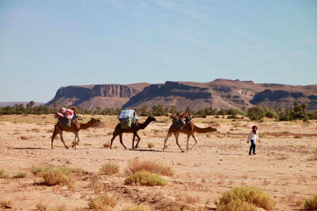 Spotyride morocco mirleft
